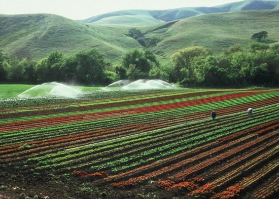 agricultural land photo